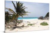 Een wit zandstrand met palmbomen bij het Nationaal park Tulum in Mexico Aluminium 180x120 cm - Foto print op Aluminium (metaal wanddecoratie) XXL / Groot formaat!
