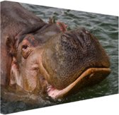 Zwemmende nijlpaard Canvas 80x60 cm - Foto print op Canvas schilderij (Wanddecoratie woonkamer / slaapkamer) / Dieren Canvas Schilderijen