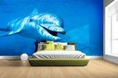 Tuimelaar dolfijn onder water Fotobehang 380x265