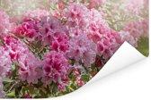 Zomerse kleuren van de hortensia Poster 180x120 cm - Foto print op Poster (wanddecoratie woonkamer / slaapkamer) XXL / Groot formaat!