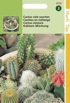 Hortitops Zaden - Cactus All-Round Mengsel