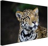 Nieuwsgierige luipaard foto Canvas 30x20 cm - Foto print op Canvas schilderij (Wanddecoratie)