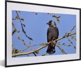 Foto in lijst - Foto van een kauw hoog in de boom fotolijst zwart met witte passe-partout 60x40 cm - Poster in lijst (Wanddecoratie woonkamer / slaapkamer)