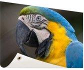 Blauw en gele ara fotoafdruk Tuinposter 200x100 cm - Foto op Tuinposter / Schilderijen voor buiten (tuin decoratie)