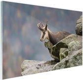 FotoCadeau.nl - Geit met horens foto afdruk Glas 60x40 cm - Foto print op Glas (Plexiglas wanddecoratie)