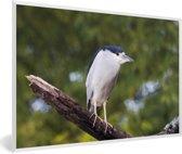 Foto in lijst - Schuitbekreiger op een tak fotolijst wit 60x40 cm - Poster in lijst (Wanddecoratie woonkamer / slaapkamer)