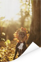 Staffordshire Bull Terrier tussen de herfstbladeren Poster 40x60 cm - Foto print op Poster (wanddecoratie woonkamer / slaapkamer) / Huisdieren Poster