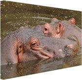 Nijlpaarden naast elkaar Canvas 80x60 cm - Foto print op Canvas schilderij (Wanddecoratie woonkamer / slaapkamer) / Dieren Canvas Schilderijen