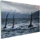 Drie orkas Glas 90x60 cm - Foto print op Glas (Plexiglas wanddecoratie)