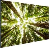 Hoge groene bomen in jungle Aluminium 90x60 cm - Foto print op Aluminium (metaal wanddecoratie)