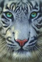 Educa De witte tijger - 500 stukjes