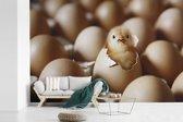 Fotobehang vinyl - Een net uitgekomen kuikentje tussen meerdere eieren breedte 330 cm x hoogte 220 cm - Foto print op behang (in 7 formaten beschikbaar)