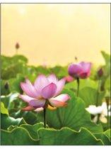 Notitieboek Lotus Field