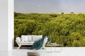 Fotobehang vinyl - Duinen en pijnbomen in het Spaanse Nationaal park Doñana breedte 450 cm x hoogte 300 cm - Foto print op behang (in 7 formaten beschikbaar)
