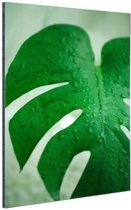 Botanische print druppels op een blad Aluminium 120x180 cm - Foto print op Aluminium (metaal wanddecoratie) XXL / Groot formaat!