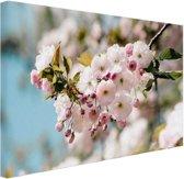 Bloesem in de lente Canvas 60x40 cm - Foto print op Canvas schilderij (Wanddecoratie woonkamer / slaapkamer)