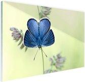 Blauwe vlinder Glas 90x60 cm - Foto print op Glas (Plexiglas wanddecoratie)