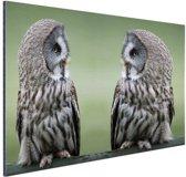 Grote grijze uilen Aluminium 120x80 cm - Foto print op Aluminium (metaal wanddecoratie)
