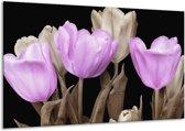 Glasschilderij Tulp | Paars, Zwart, Grijs | 120x70cm 1Luik | Foto print op Glas |  F002680