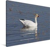 Sneeuwgans in het water Canvas 140x90 cm - Foto print op Canvas schilderij (Wanddecoratie woonkamer / slaapkamer)