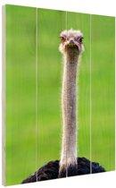 Struisvogel uitgestoken nek Hout 20x30 cm - klein - Foto print op Hout (Wanddecoratie)