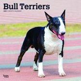 Bull Terriers - Bull Terrier 2020 - 18-Monatskalender mit freier DogDays-App