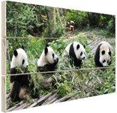 Reuze pandas in de natuur Hout 160x120 cm - Foto print op Hout (Wanddecoratie) XXL / Groot formaat!
