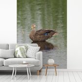 Fotobehang vinyl - Een blauwvleugeltaling bevindt zich in ondiep water breedte 220 cm x hoogte 300 cm - Foto print op behang (in 7 formaten beschikbaar)