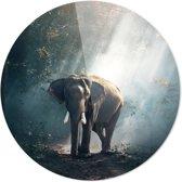 Olifant | Dieren | Rond Plexiglas | Wanddecoratie | 90CM x 90CM | Schilderij | Foto op plexiglas