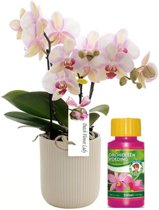 Orchideen voedsel 100ml