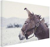 Ezel in de sneeuw Canvas 60x40 cm - Foto print op Canvas schilderij (Wanddecoratie woonkamer / slaapkamer) / Dieren Canvas Schilderij