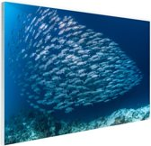 School met vissen Glas 30x20 cm - klein - Foto print op Glas (Plexiglas wanddecoratie)