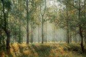 CANVASDOEK BOS | Wanddecoratie | 60 CM x 40 CM | Canvas | Foto op canvas | Schilderij | Aan de muur | Natuur | Landschap