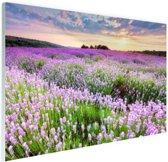 Paarse bloemenzee Glas 180x120 cm - Foto print op Glas (Plexiglas wanddecoratie) XXL / Groot formaat!