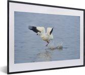 Foto in lijst - Ross gans vliegt uit het water fotolijst zwart met witte passe-partout klein 40x30 cm - Poster in lijst (Wanddecoratie woonkamer / slaapkamer)