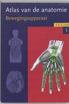 Sesam atlas van de anatomie / 1 Het bewegingsapparaat