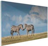 Verliefde zebras fotoafdruk Glas 120x80 cm - Foto print op Glas (Plexiglas wanddecoratie)