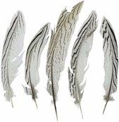 Zilverfazant  veren 18 cm 5 stuks