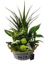 Kamerplant van Botanicly – Arrangement Basic creatie in zink groen – Hoogte: 50 cm