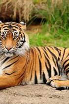 Mindblowing Cute Big Cats Journal 4