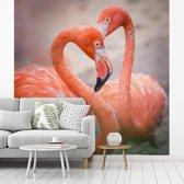 Fotobehang vinyl - Twee rode flamingos vormen samen een hartje breedte 240 cm x hoogte 240 cm - Foto print op behang (in 7 formaten beschikbaar)