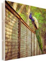 Pauw bevindt zich op een ijzeren hek Vurenhout met planken 50x50 cm - Foto print op Hout (Wanddecoratie)