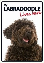 Labradoodle lives here