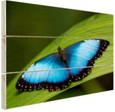 Morpho vlinder op blad Hout 80x60 cm - Foto print op Hout (Wanddecoratie)