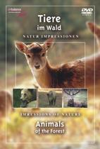 Tiere Im Wald (dvd)