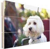 Schattige Maltezer hond Vurenhout met planken 90x60 cm - Foto print op Hout (Wanddecoratie)