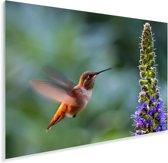 Een vrouwelijke kolibrie zwevend naast een felgekleurde bloem Plexiglas 120x80 cm - Foto print op Glas (Plexiglas wanddecoratie)