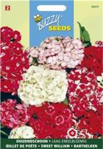 Dianthus barbatus (laag enkelbloemig)