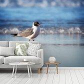 Fotobehang vinyl - Lachmeeuw loopt over de kustlijn breedte 450 cm x hoogte 360 cm - Foto print op behang (in 7 formaten beschikbaar)