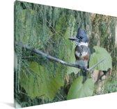 Een Bandijsvogel tussen de groene bladeren Canvas 180x120 cm - Foto print op Canvas schilderij (Wanddecoratie woonkamer / slaapkamer) XXL / Groot formaat!